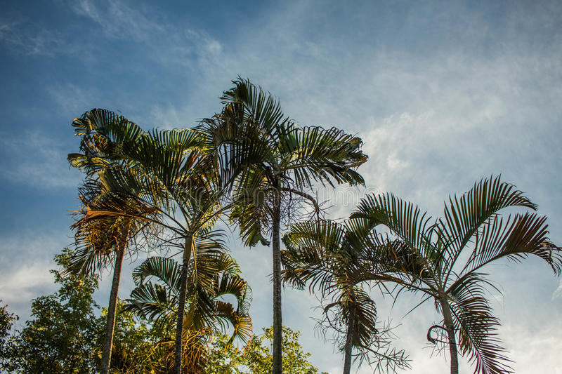 Palm in the garden stock photography
