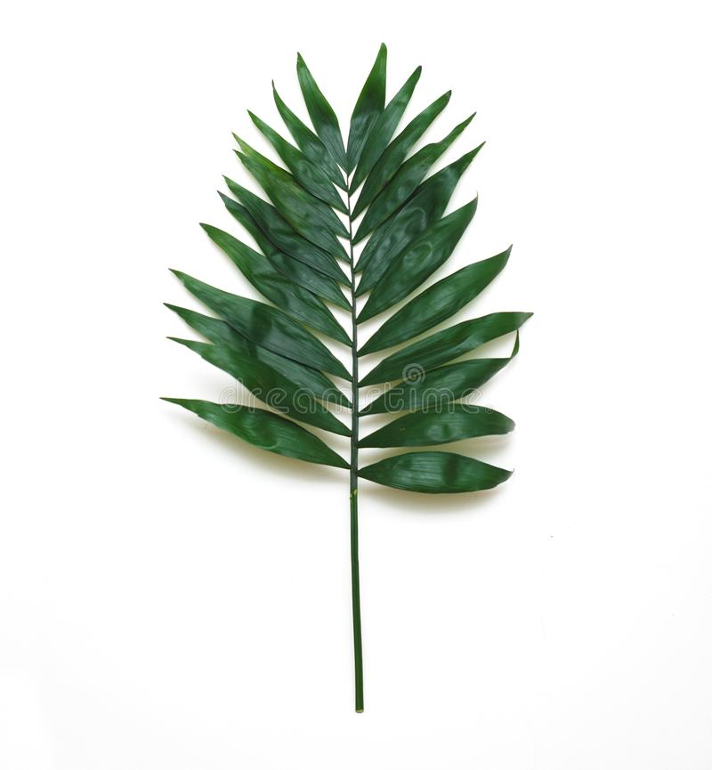 Palm Green Leaves Tropical Exotic Tree Isoalted on White Background. Square Image. Holliday Patern Template stock photography