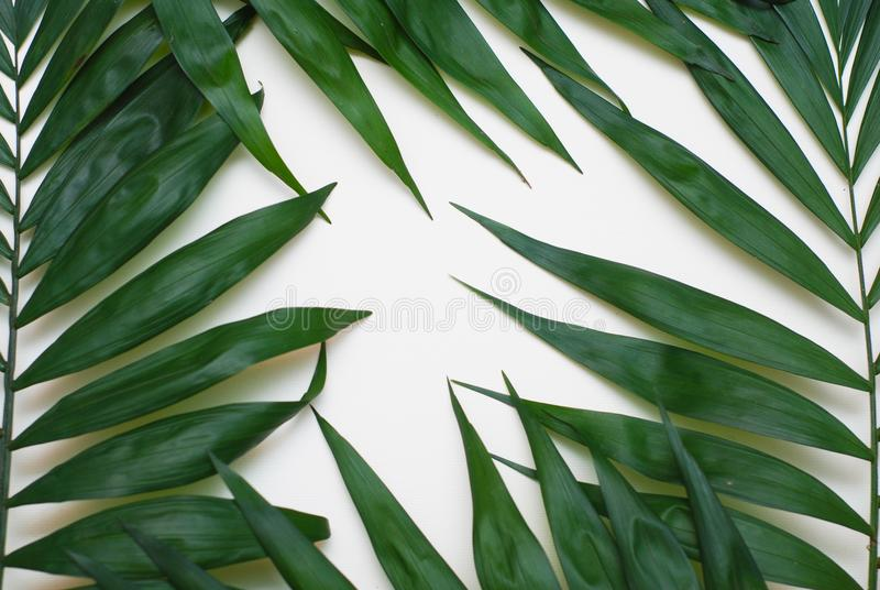 Palm Green Leaves Tropical Exotic Tree Isoalted on White Background. Holliday Patern Template stock image