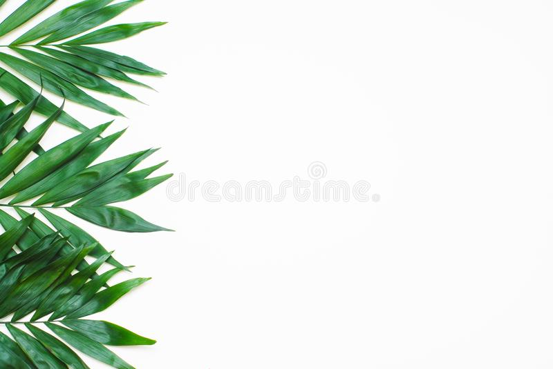 Palm Green Leaves Tropical Exotic Tree Isoalted on White Background. Holliday Patern Template. Palm Green Leaves Tropical Exotic Tree Isoalted on White royalty free stock image