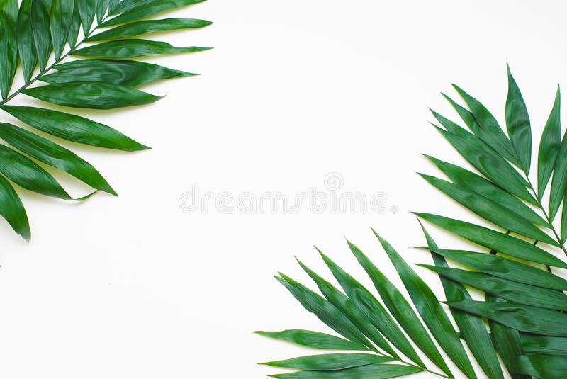 Palm Green Leaves Tropical Exotic Tree Isoalted on White Background. Holliday Patern Template stock photos