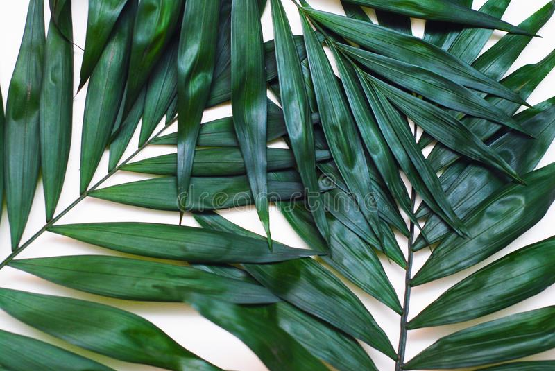 Palm Green Leaves Tropical Exotic Tree Isoalted on White Background. Holliday Patern Template royalty free stock images
