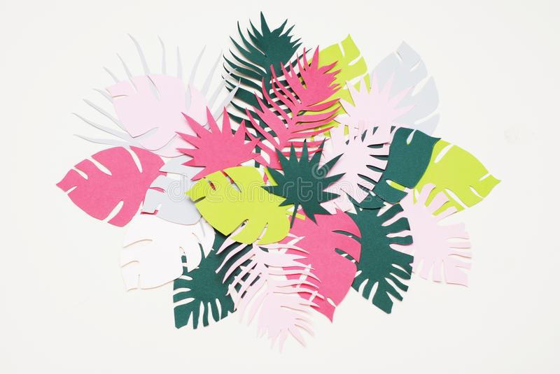 Palm Green Leaves Tropical Exotic Tree Isoalted on White Background. Square Image. Holliday Patern Template Leaf royalty free stock image