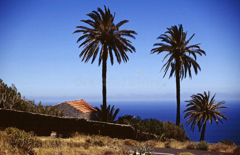 Palm group sea view royalty free stock photos