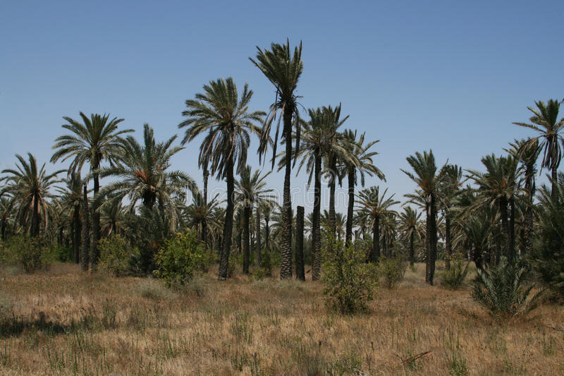 Download Palm grove stock image. Image of tree, summer, grove - 16366663
