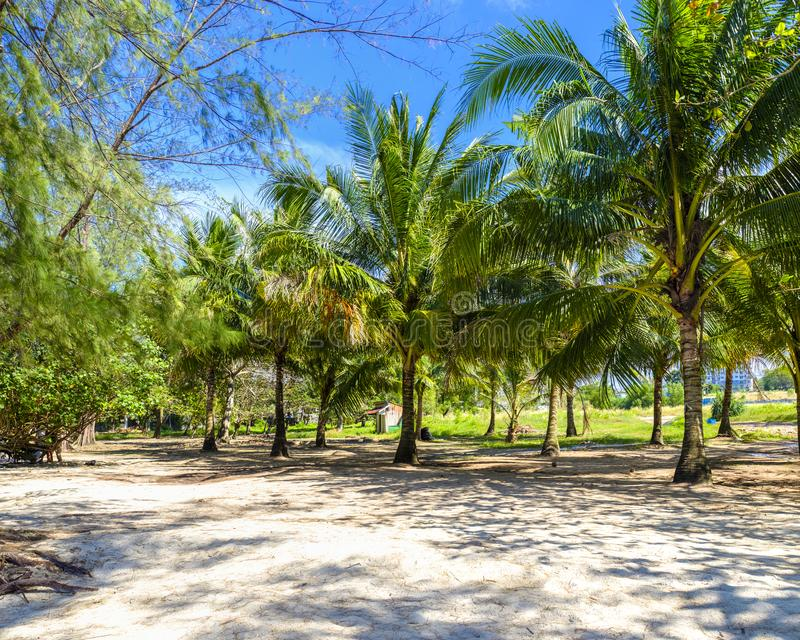 Palm grove by a beach royalty free stock photography