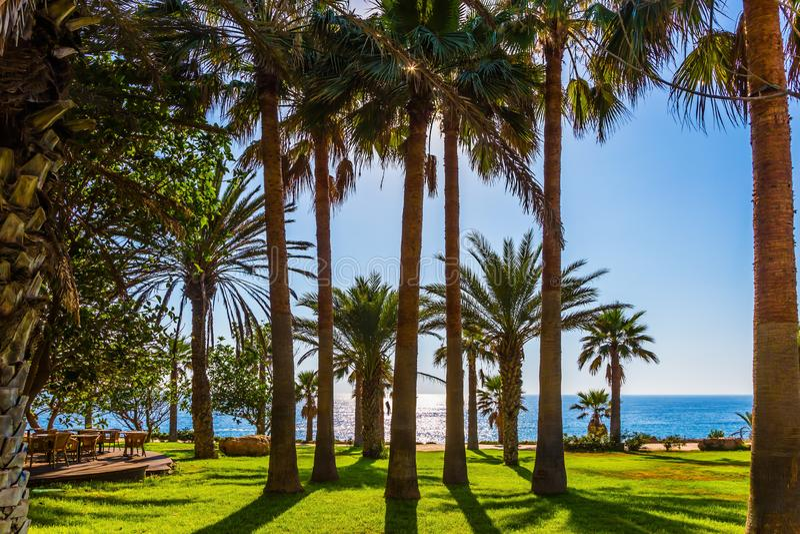 Palm grove on the beach royalty free stock photo