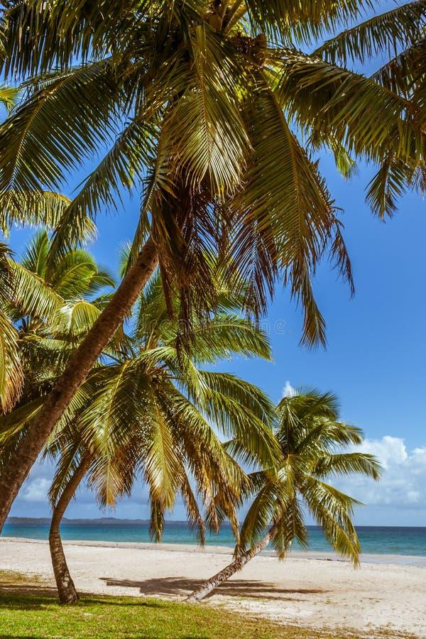 Palm grove on the beach stock photos