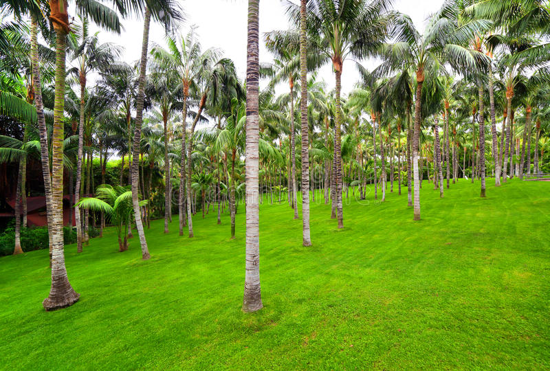 Palm grove in Loro park, Tenerife royalty free stock image