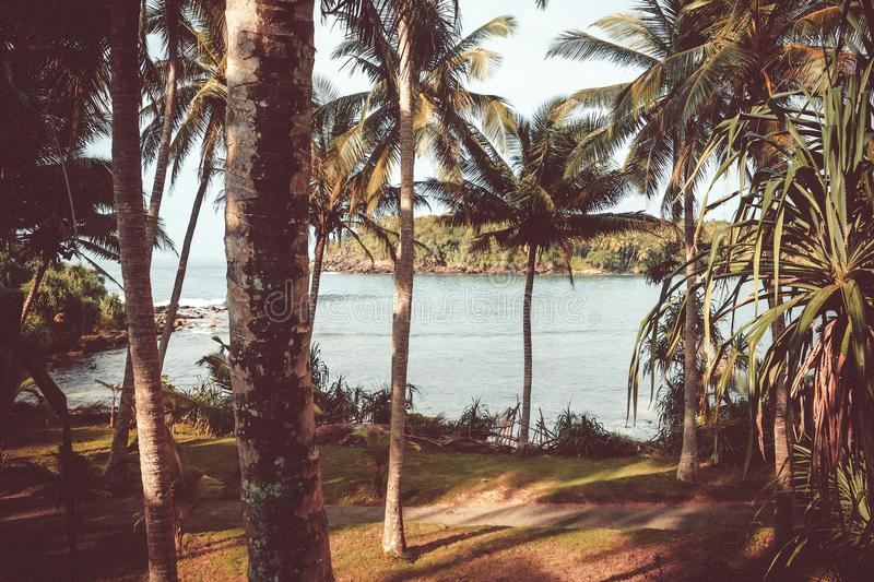 Palm grove in vintage style filter. Ocean beach scene with calm waves, aloe vera and coconut trees around. royalty free stock photography