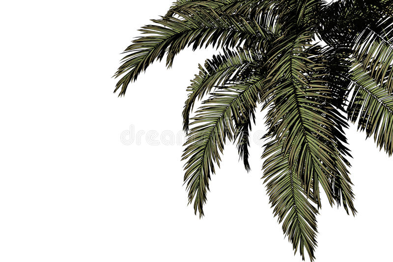 Download Palm hanging. stock photo. Image of vegetation, tropic - 13869760