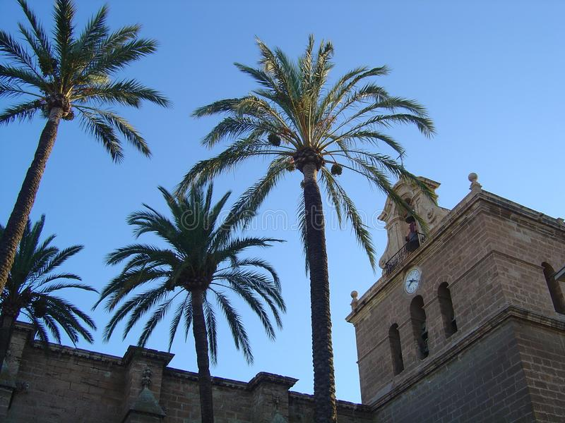 Palm, hemel en klokketoren stock afbeeldingen