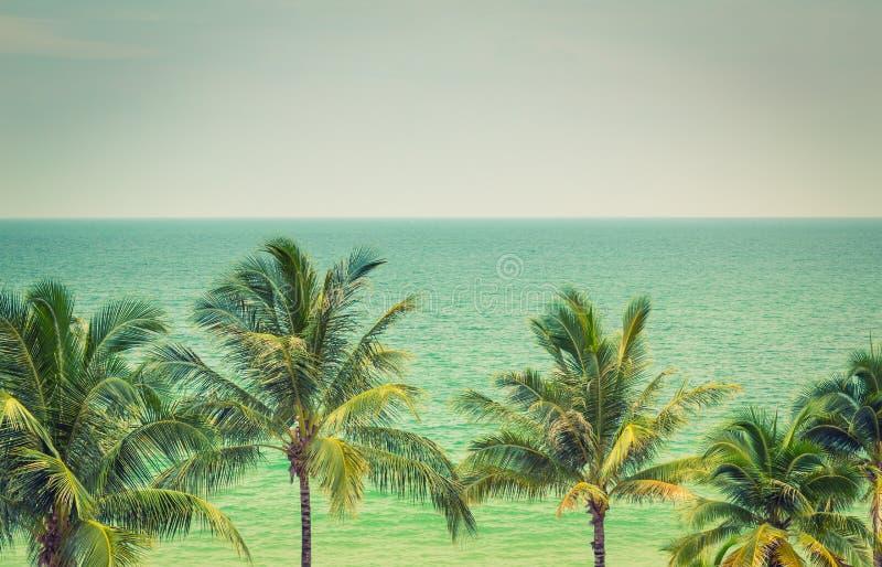 Palm (het Gefiltreerde beeld verwerkte vi stock afbeelding