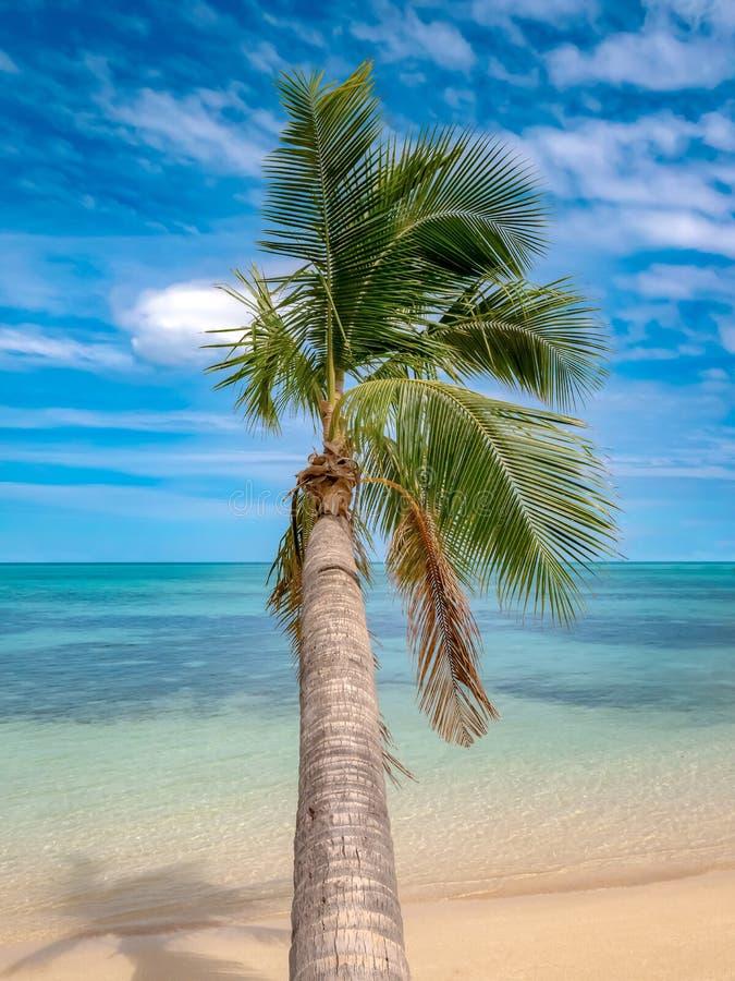 Palm in het midden van een tropisch strand met wit zand en turkooise overzees royalty-vrije stock foto's