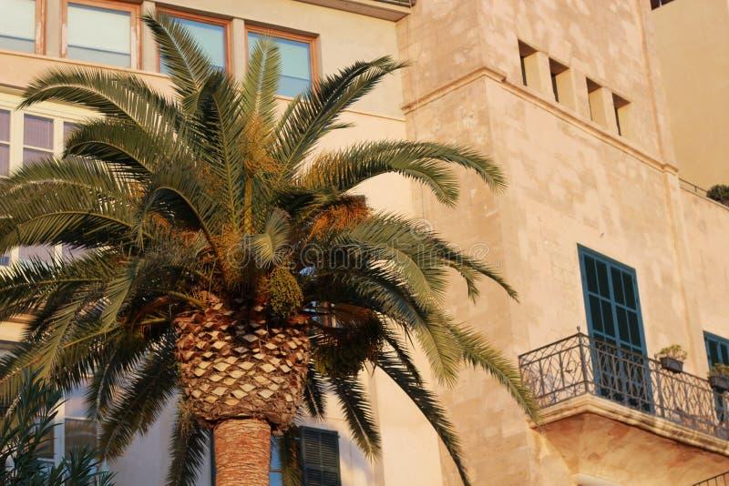 Palm in het zonsonderganglicht met mallorcan balkon royalty-vrije stock fotografie