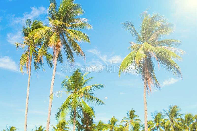 Palm in hete lucht van tropisch eiland Heldere blauwe hemelachtergrond royalty-vrije stock foto's