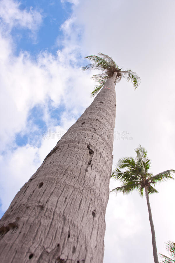 Palm Hight Royalty Free Stock Photo