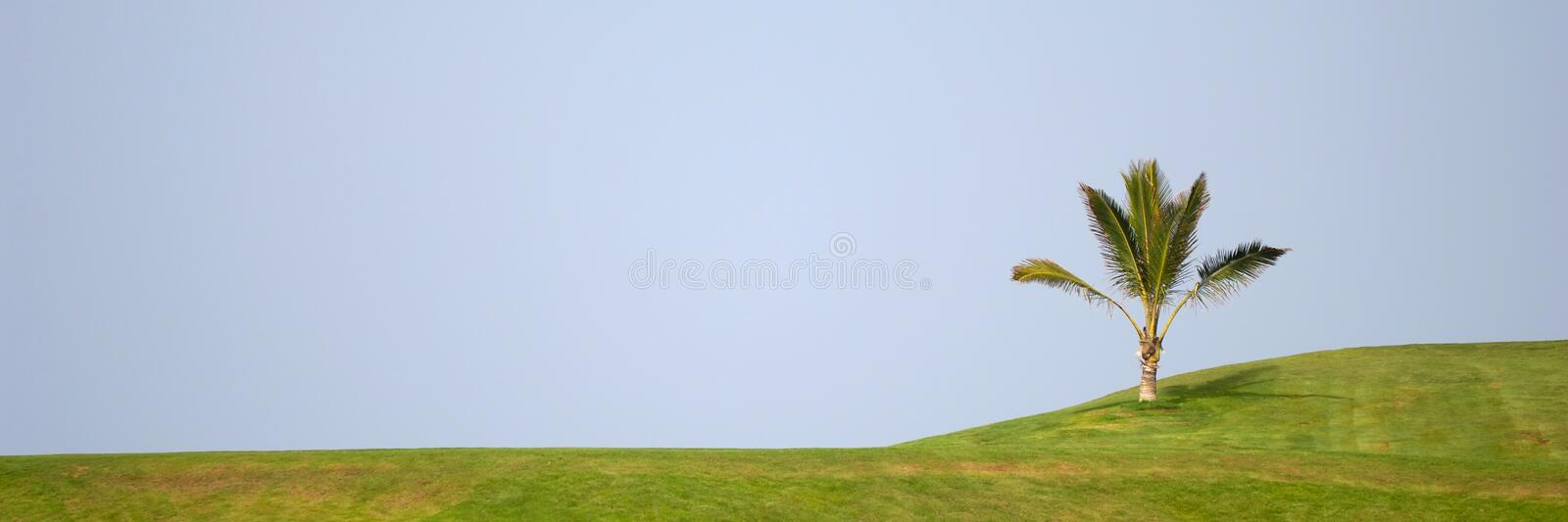 Palm on hill. Plam on a green hill stock photo