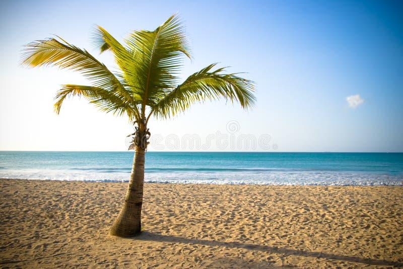Download Palm I stock image. Image of caribbean, enjoy, beautiful - 5240267