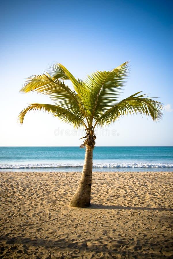 Free Palm II Royalty Free Stock Photos - 5240518