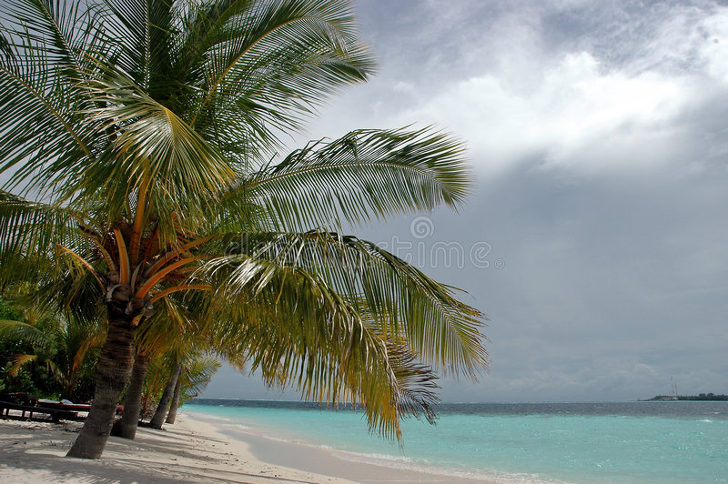 Palm on island stock photography