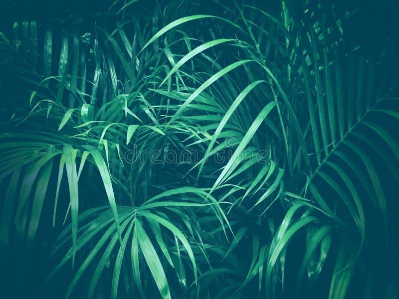 Palm jungle foliage nature background. Dark green palm jungle foliage nature background stock illustration