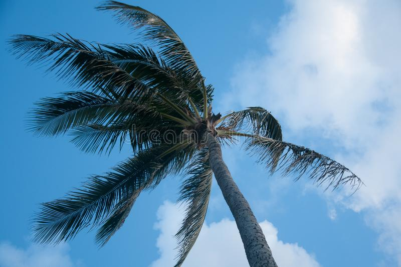 Palm in Kapaa op Kauai beachfront stock afbeelding