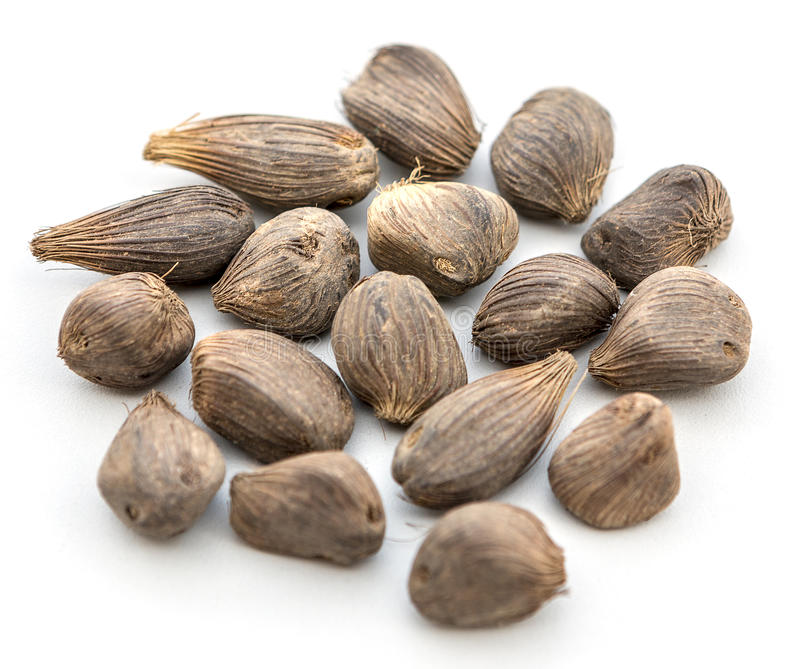 Oil Edible Plants : Palm kernel stock image of africa nature seeds