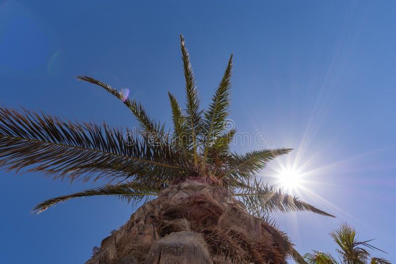 Palm kysste vid solen arkivbild