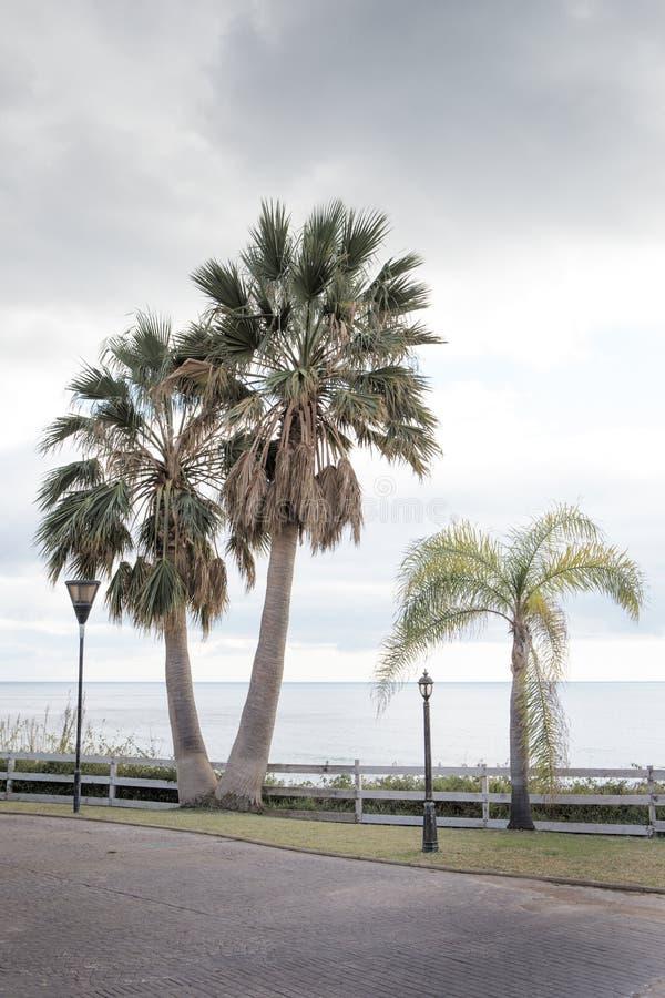 Palm langs de weg in Spanje stock afbeeldingen