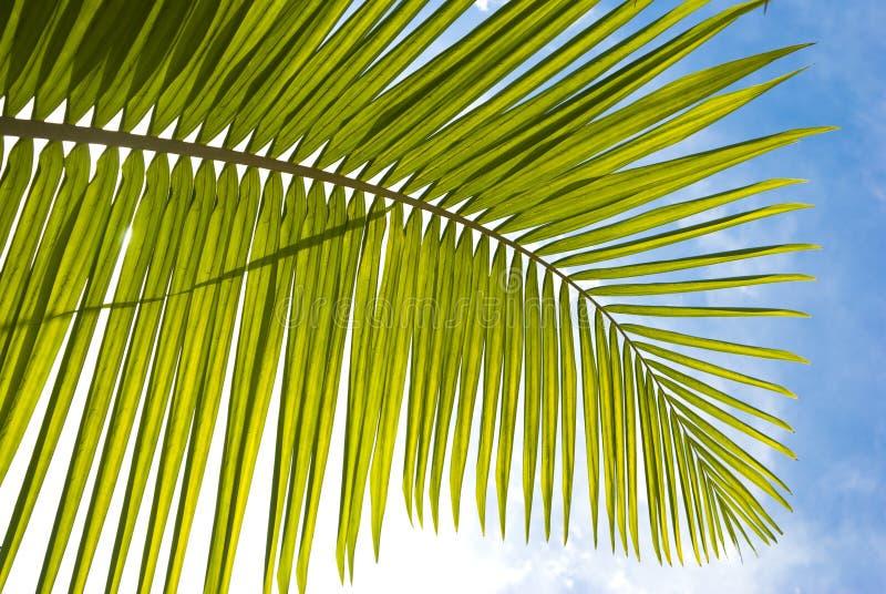 Download Palm leaf stock photo. Image of leaf, coast, coastal - 10656402
