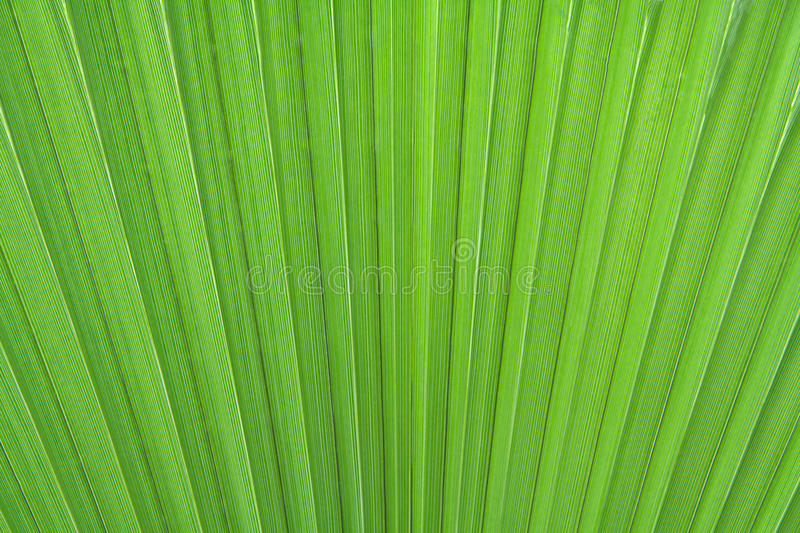 Download Palm leaf stock photo. Image of macro, green, nature - 14269150