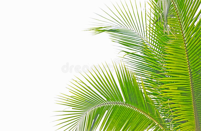 Download Palm leaf stock image. Image of background, arch, isolated - 18831767