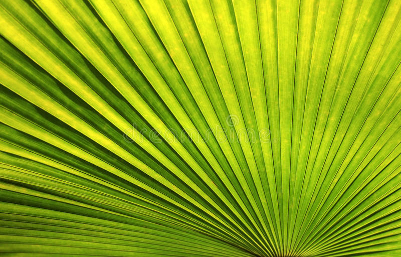 Palm leaf stock image