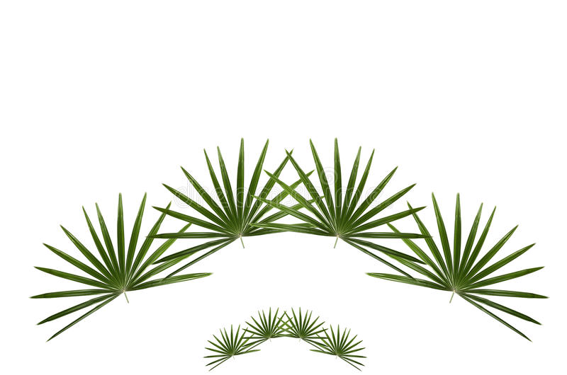 Download Palm Leaf Royalty Free Stock Photo - Image: 19927205