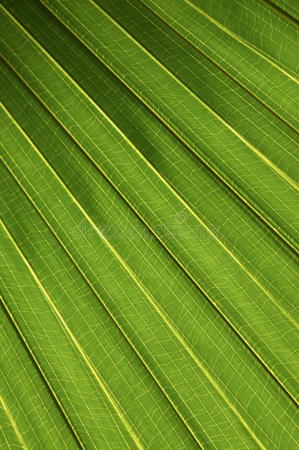Free Palm Leaf Royalty Free Stock Images - 206349