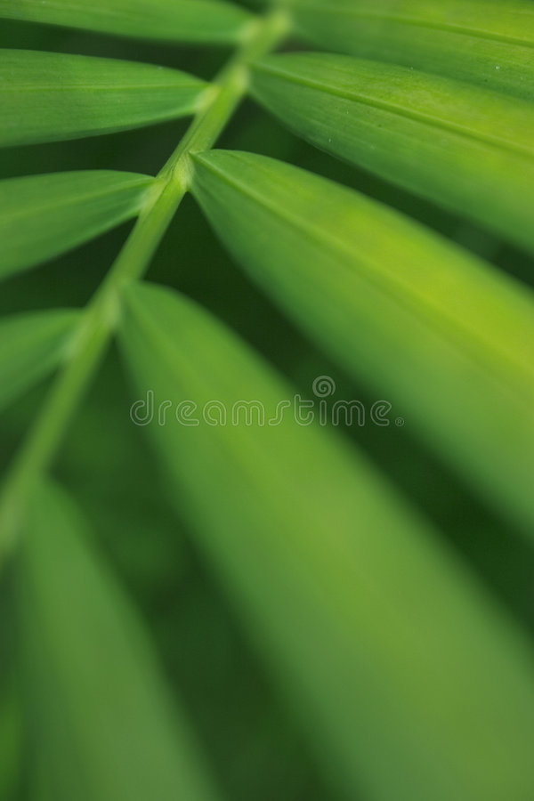 Palm Leaf. An abstract of a palm leaf. Suitable for backgrounds