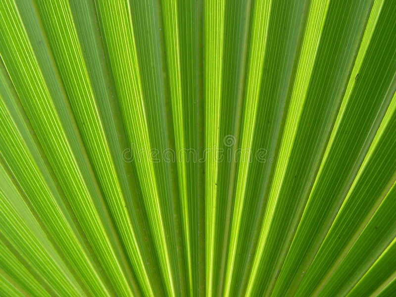Download Palm leaf stock image. Image of paradise, palm, lead, plant - 22869