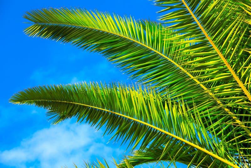 Download Palm leaf stock image. Image of blue, white, leaf, flora - 24118401
