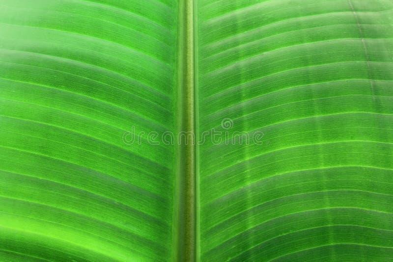 Download Palm Leaf stock photo. Image of background, ecology, traveler - 27417776