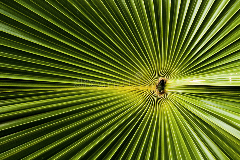 Download Palm Leaf Stock Photography - Image: 4389272