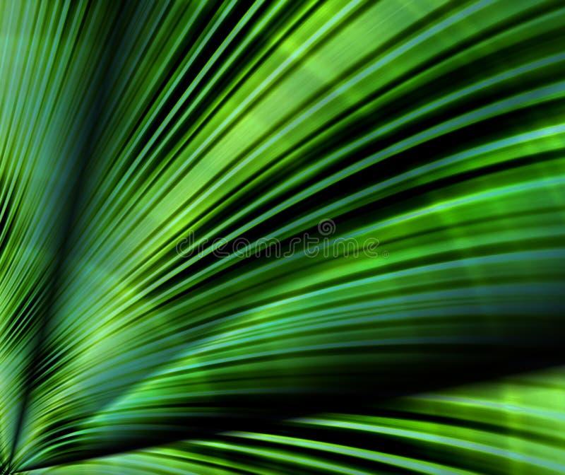 Palm leaf. Background design of close up fan of a green palm leaf vector illustration