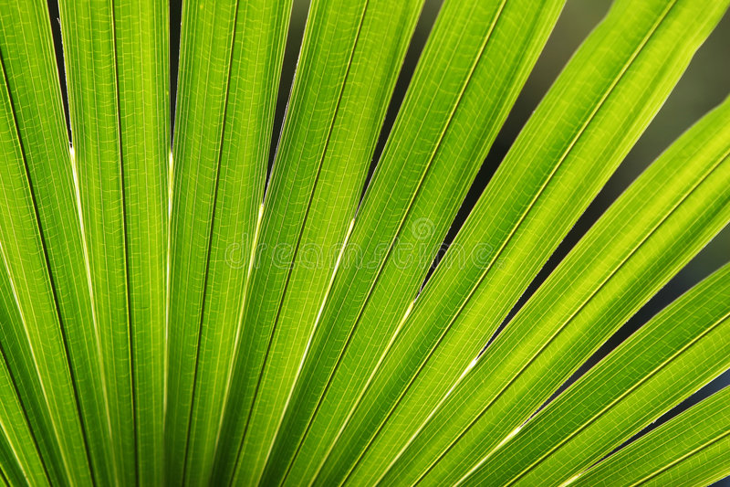 Download Palm Leaf stock image. Image of paradise, growth, texture - 5243461