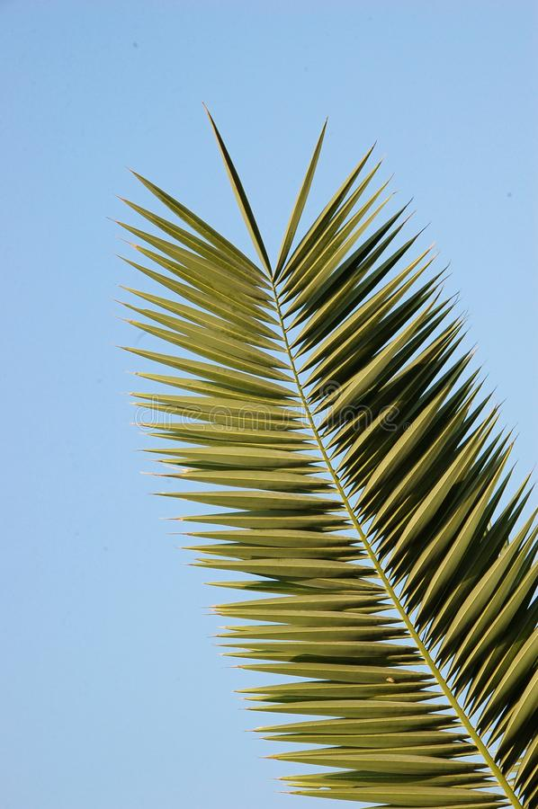 Download Palm Leaf stock photo. Image of clear, leaf, green, coconut - 7736326