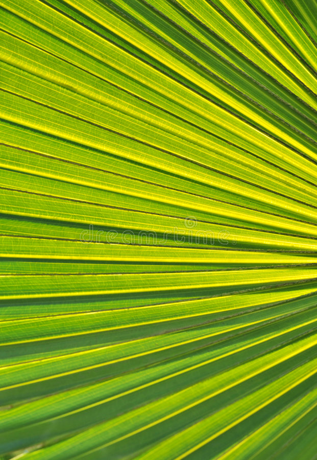 Free Palm Leaf Royalty Free Stock Photography - 8014717
