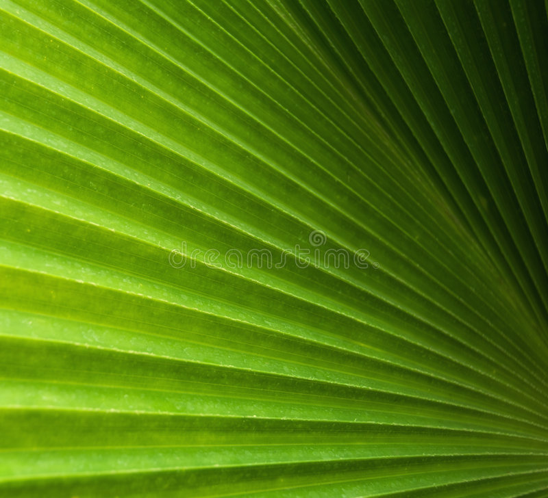 Free Palm Leaf Stock Images - 8724084
