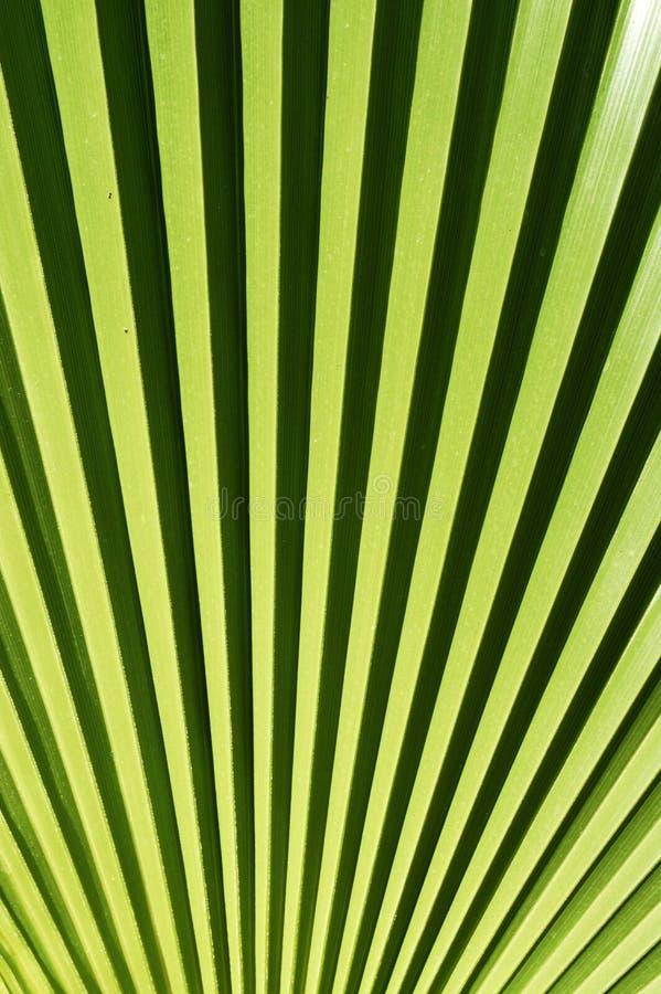 Palm leaf royalty free stock image