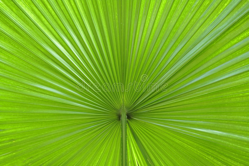 Download Palm leaf abstract stock image. Image of brazil, palm - 2255255