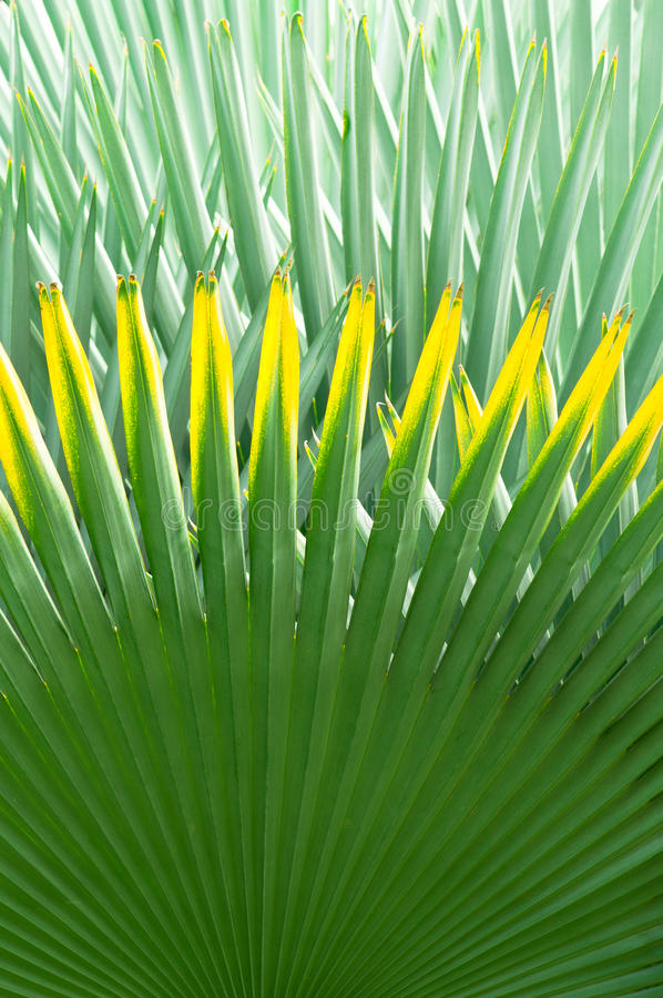 Palm Leaf Background stock photography