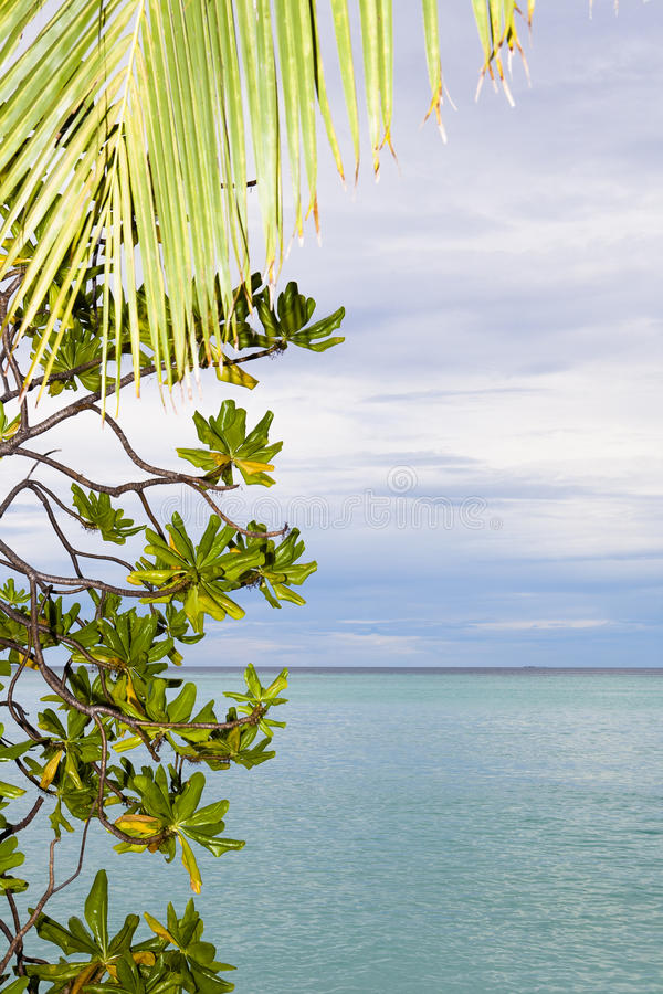 Download Palm leaf and the beach stock photo. Image of coast, island - 27339472
